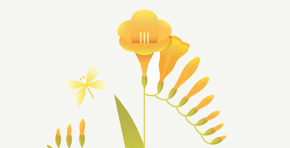 Fauna y flora de Platonia, por Úrsula Epops