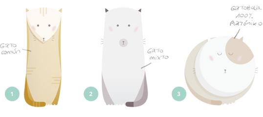 Evolución del gatobola platóniko
