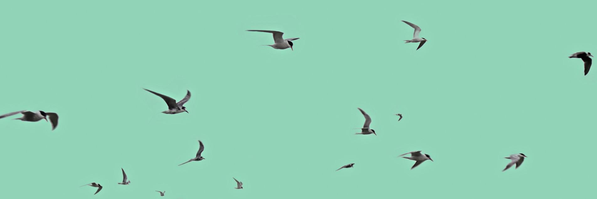 Platonia, donde para volar no hacen falta alas
