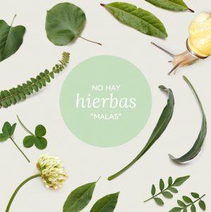 Herbario platóniko