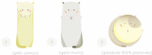 Del gato común al gatobola platóniko