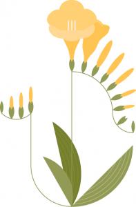 Pulbesia platónika, flor de pulbo