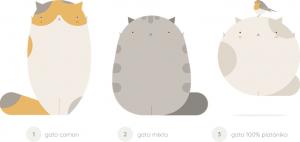 Evolución del gato común al gatobola platóniko
